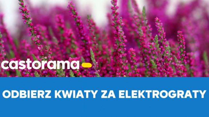 Kwiaty Za Elektrograty W Castoramie
